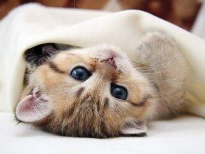 安卓萌宠 猫 喵星人 喵喵手机壁纸