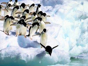 安卓萌宠 极地物种 企鹅 可爱手机壁纸