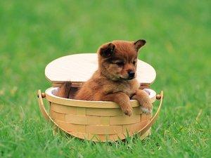 安卓可爱 小狗狗 摄影 宽屏 动物手机壁纸