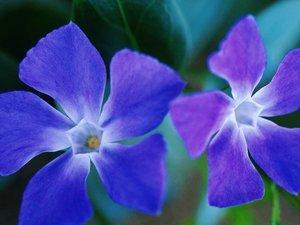 安卓成双成对 植物 甜蜜手机壁纸