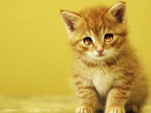 安卓萌宠 动物 可爱 儿童桌面专用 宠物 喵星人 卖萌图手机壁纸