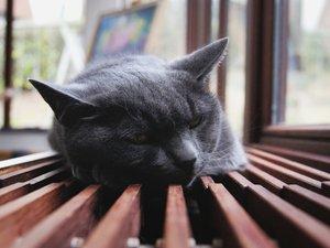 安卓萌宠 动物 可爱 萌物 宠物 喵星人 猫 睡觉中 儿童桌面专用手机壁纸