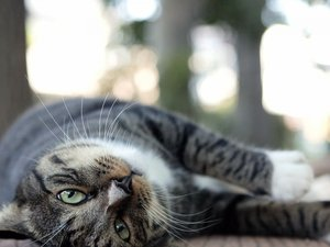 安卓街角 小猫咪 摄影 高清 猫 动物 喵星人手机壁纸