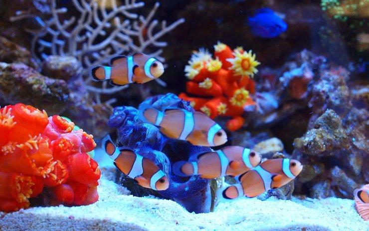 安卓动物 海底世界 海洋生物手机壁纸