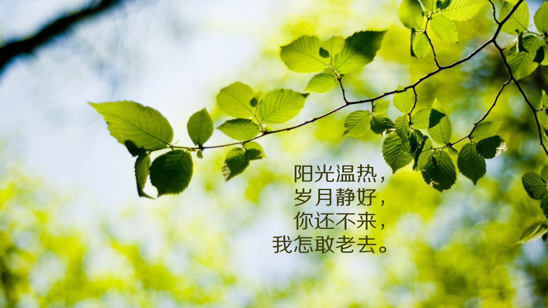 背景 壁纸 绿色 绿叶 树叶 植物 桌面 1920_1080