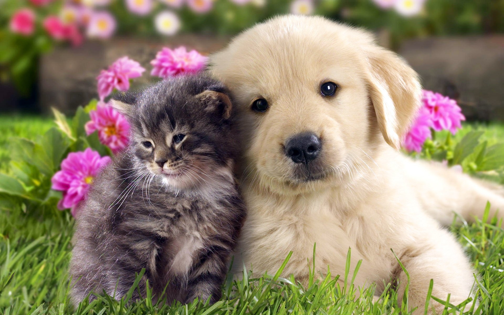 萌宠 动物 可爱 小猫 小狗 喵星人 汪星人 儿童 桌