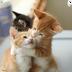 萌货小动物1-爱动态壁纸