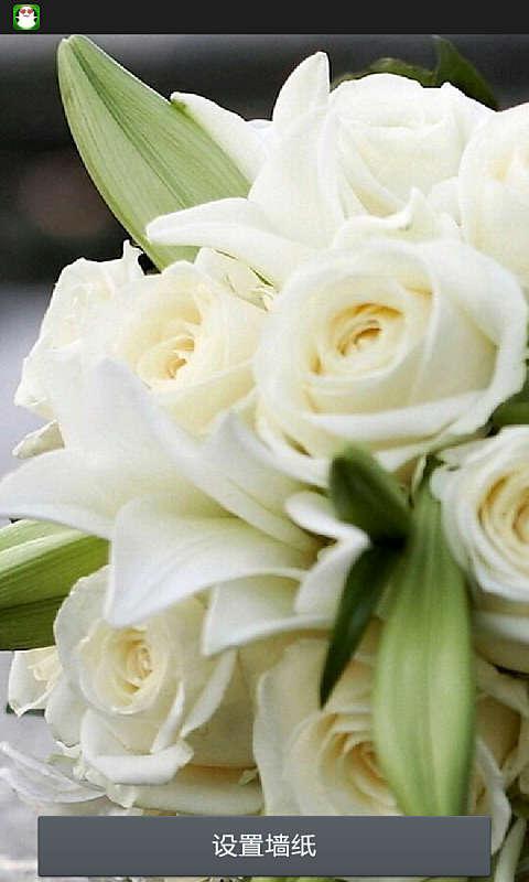 下载 玫瑰生活壁纸 下载 漂亮玫瑰动态壁纸 下载 唯美玫瑰-动态壁纸