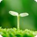 植物护眼动态壁纸