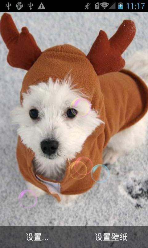 我先发个仓鼠的把推荐超可爱 搞笑的动物动画动物动画的爱护,去看看