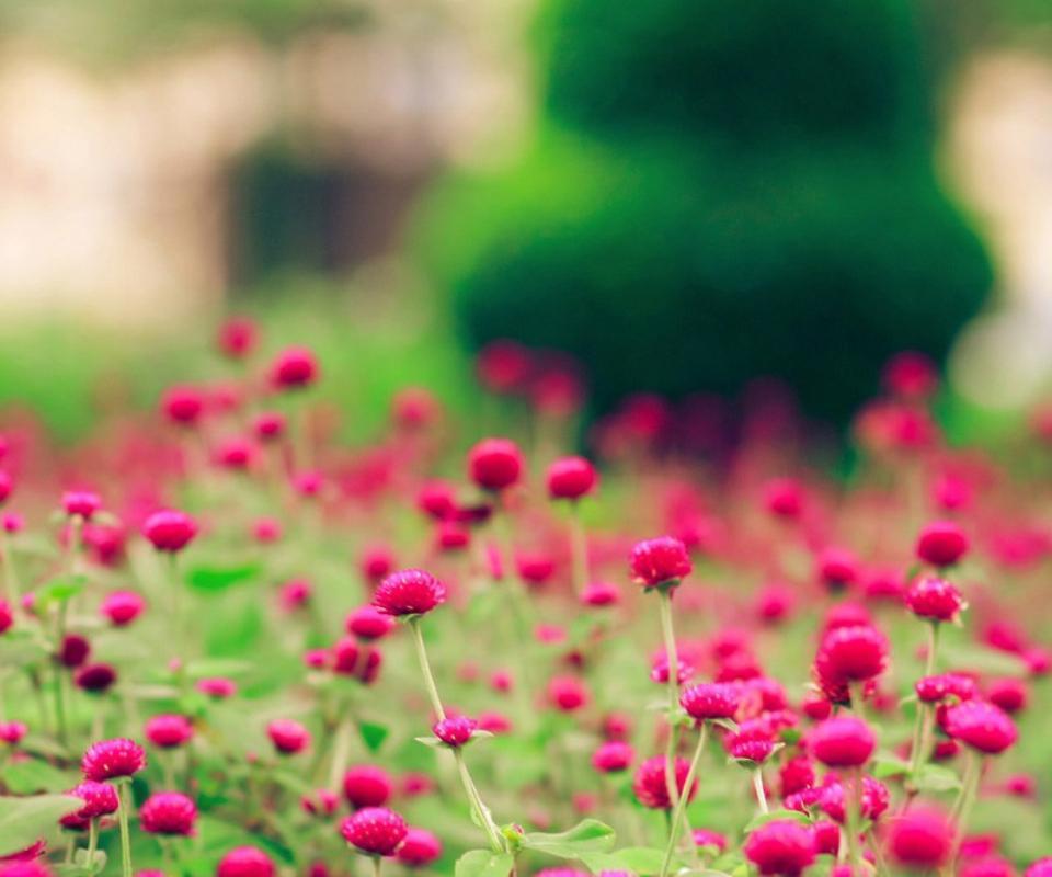 大爱花朵-桌面壁纸_360手机助手